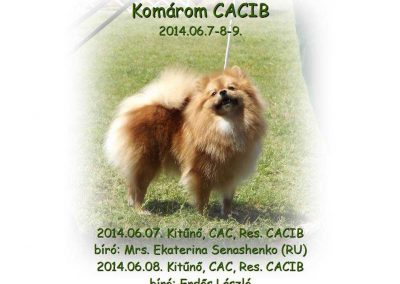 LizaKomaromCACIB2014.06.001_optimized
